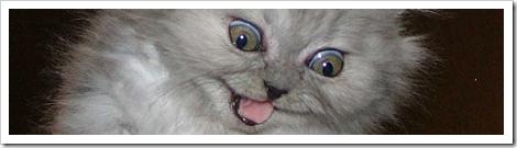 _gato_assustado
